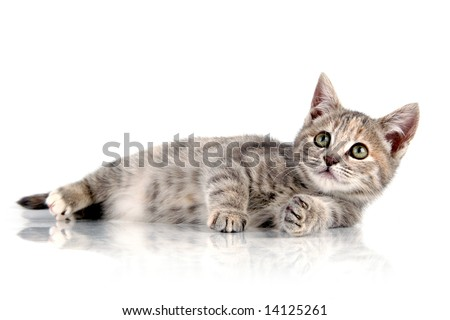 Perfect little kitten lying down - stock photo