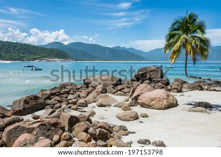 Perfect One Palm Tree Beach, Ilha Grande Island. Tropical Paradise Rio do Janeiro. Brazil. South America Adventure. - stock photo