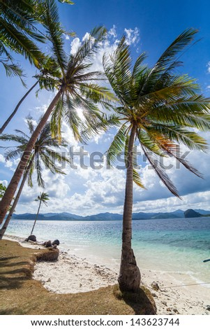 Perfect palm beach in Philippines