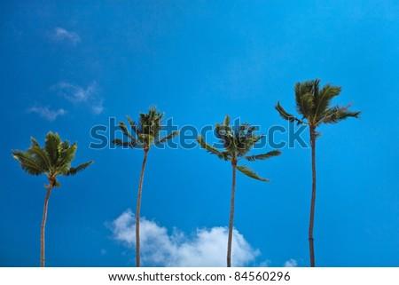 Perfect paradise coconut palm trees - stock photo