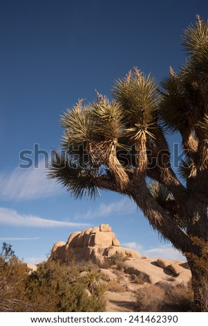 Perfect Sun and Sky at Joshua Tree National Park - stock photo
