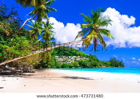 perfect tropical beach scenery - palm tree over turquoise sea