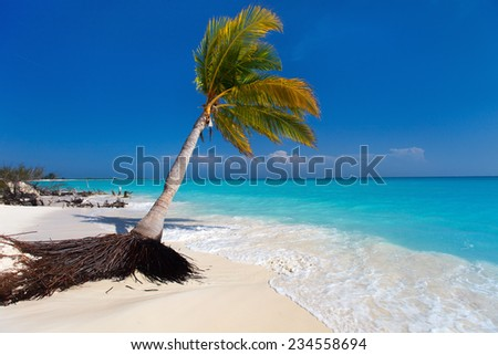 Perfect tropical white sand beach with coconut palm - stock photo