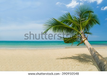 Perfect tropical white sand beach with coconut palm