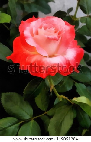 Perfectly Beautiful Orange and Pink Rose Painting