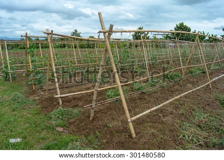 Pergola and soil preparation land ready for planting agriculture
