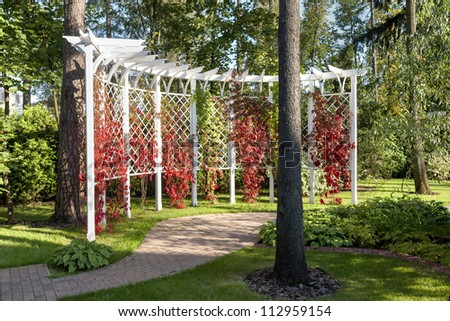 Pergola and Virginia creeper - stock photo