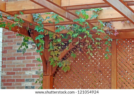 Pergola covered by hanging grapevines - stock photo