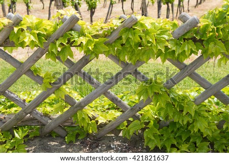 pergola fence with leaves