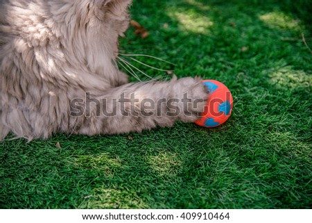 Persian cat happy/ playing / catching with his red and blue ball on grass tufted in the garden - stock photo