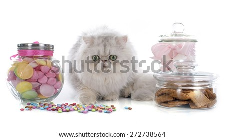 persian cat in front of white background - stock photo