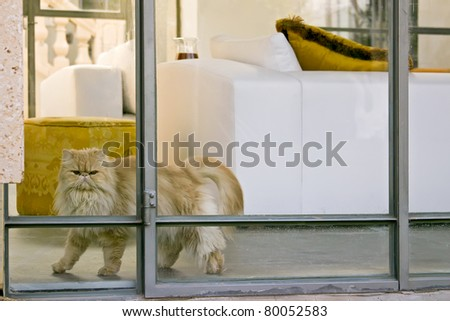 Persian cat in the interior of the house - stock photo