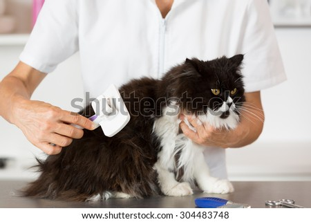 Persian cat in the salon of a veterinary clinic