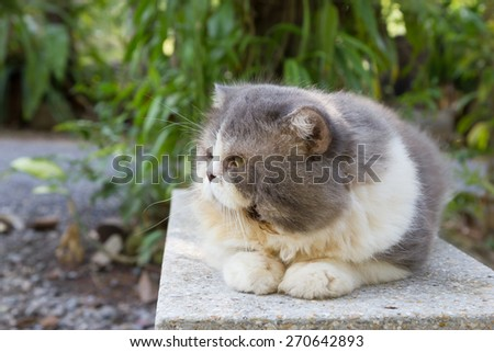 Persian cat sit on bench