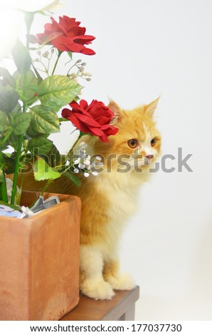 persian cat with bouquet of red rose - stock photo
