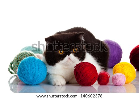persian exotic cat isolated with balls of different colours
