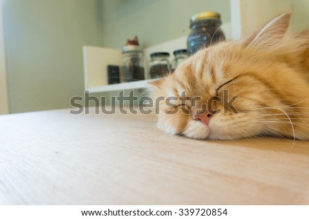 persian, one of cat species sleep on table - stock photo