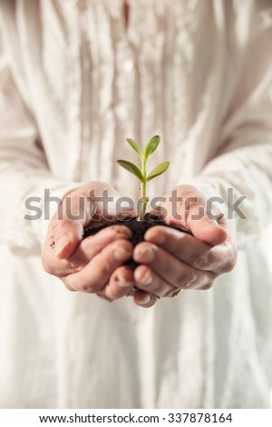 Person holding a young plant - stock photo