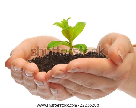 Person holding plant in the hand - stock photo