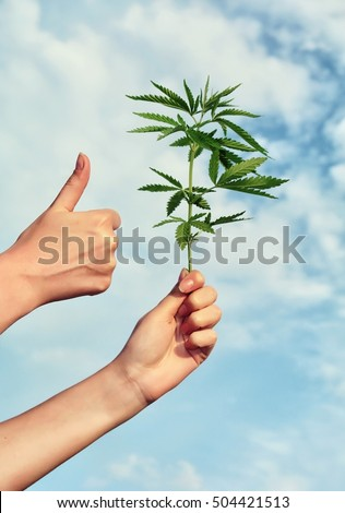 Person holding young cannabis leaf on sky background and thumb up