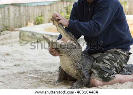 Person performing a performace with alligator in the Florida Everglades.