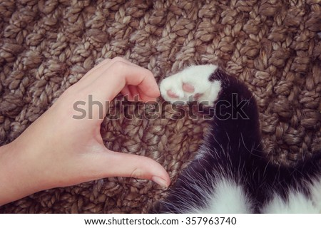 Person's hand and a cat's paw making a heart shape.  Instagram toned effect. Focus on fingertips - stock photo