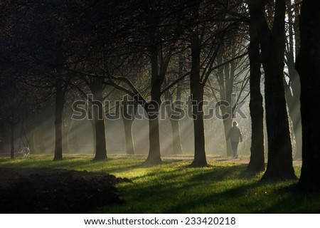 Person walking on a path surrounded by an avenue of trees. Sun rays can be seen through the fog and mist. There is also a dog on the path.