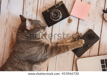 Personal workspace - kitten with technology on the floor