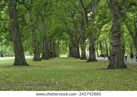 perspective trees in Hyde Park - stock photo