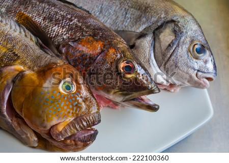 Peru fish variety, Rock fish (Tramboyo) , Peruvian rock seabass (Cabrilla), and Chita - stock photo