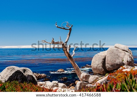 Pescadero Point, 17 Mile Drive, Big Sur, California, USA - July 1, 2012: The 17 Mile Drive is a scenic roadthrough Pacific Grove and Pebble Beach in Big Sur, Monterey, California, USA. - stock photo