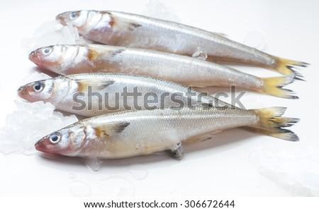 pescados pejerreyes crudos enteros listos para prepararse - stock photo