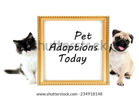Pet adoption concept. Funny pug dog and little kitten isolated on white - stock photo