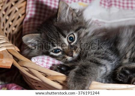 pet cat a few months puppy - stock photo