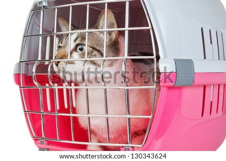 Pet cat trapped in a cage for a veterinarian. - stock photo