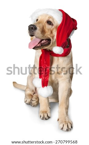Pet, dog, animal. - stock photo