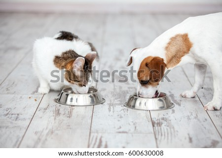 Pet eating foot. Dog and cat eats food from bowl