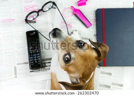 Pet Jack Russel terrier looking for a job. Newspaper advertisement and marker notes offer - stock photo