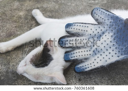 pet owner removing cat hairs with grooming glove