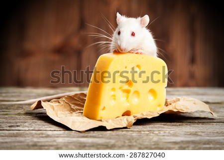 Pet rat with a large piece of cheese, wooden background - stock photo
