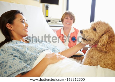 Pet Therapy Dog Visiting Female Patient In Hospital - stock photo