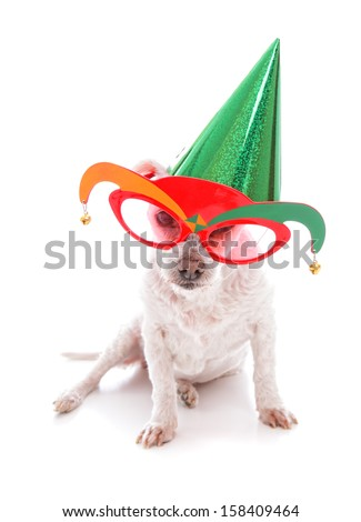 Pet wearing court jester glasses and wearing a party hat on a plain background.