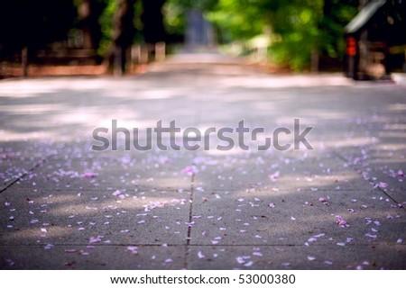 Petal - stock photo