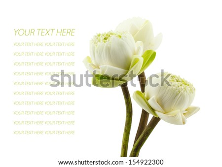 petal of the green three lotus flowers blossom isolated on white background - stock photo