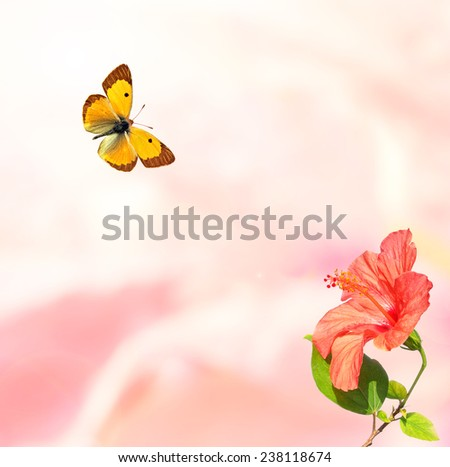 Petals blurry background with Hibiscus (Hibiscus rosa-sinensis) flower and butterfly   - stock photo