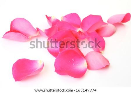Petals of a rose - stock photo