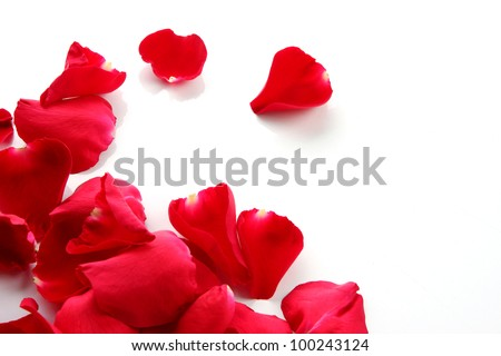 Petals of a rose and blank paper on a white background.