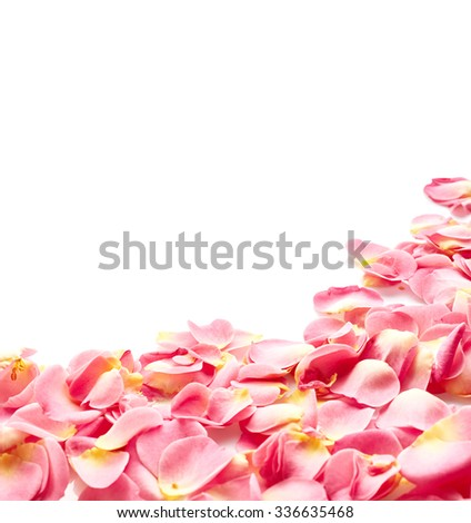 Petals of pink rose isolated on white background - stock photo