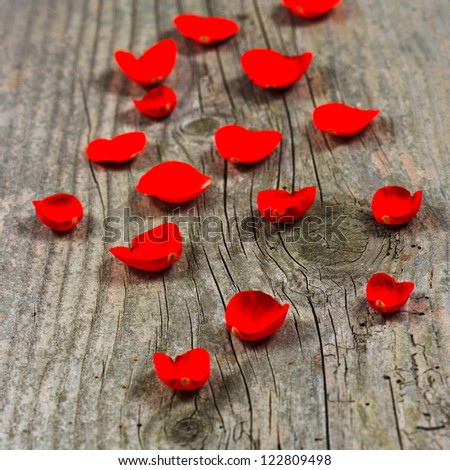 petals of red rose on rustic wooden background. selective focus