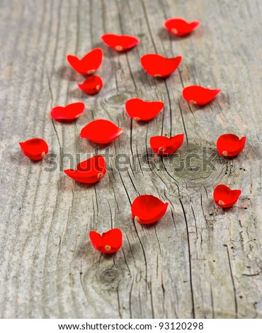 petals of red rose on wooden background. selective focus